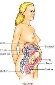 Physical Changes during pregnancy