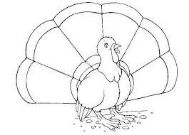 תרנגול הודו