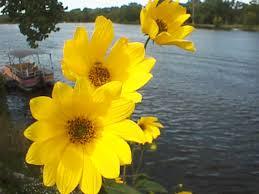 http://tbn0.google.com/images?q=tbn:Rq93pflrWNGRsM:http://www.nightmare.com/~rushing/flowers.jpg