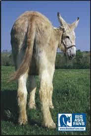 http://tbn0.google.com/images?q=tbn:S5cVidLCofcsKM:http://www.bigassfans.com/uploads/Image/donkey.jpg