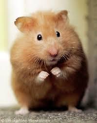 hamster_1301300 dans et si le monde...