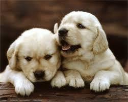 Dog Care Diarrhea