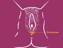 Perineum and Vagina