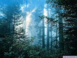 foresta_illuminata.jpg