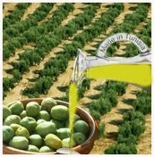 L'huile d'olive dans L'huile d'olive zitzitoune240cf9