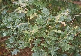 Türkiye'deki endemik ve relikt bitki türleri nelerdir?