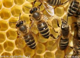 تولید عسل