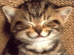chat-sourire dans et si le monde...