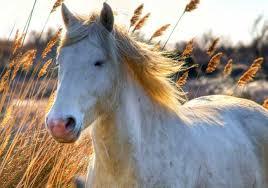 cheval-blanc dans zoNe à mOi