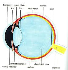 external image afbeelding1.jpg