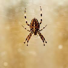 http://tbn0.google.com/images?q=tbn:dsksZk8Vukyu9M:http://www.englishrules.com/photography/nature/garage-spider.jpg