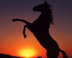 cheval%2520coucher%2520soleil