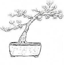 דףצביעה עץ בונסאי