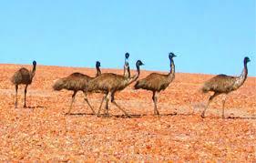 http://www.outbacknsw.com.au/local_flora_and_fauna.htm