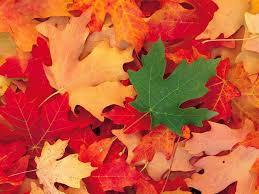 Mes résolutions automne-12