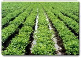 منتدى الزراعة والإقتصاد