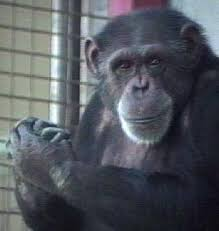 http://tbn0.google.com/images?q=tbn:j3d8OD3cxuYJdM:http://www.bohnettfoundation.org/img/programs/Animals.jpg