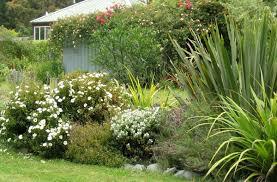 external image cistus-flax-rose-shrubs.jpg