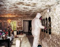 Kill black mold and mold removal