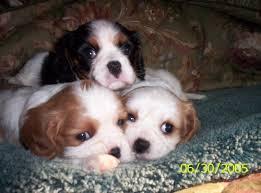 Canine Distemper Symptoms
