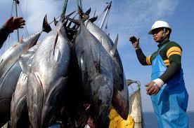 Global warming making fish