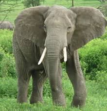 http://mormonmatters.org/2008/02/28/the-parable-of-the-elephant/