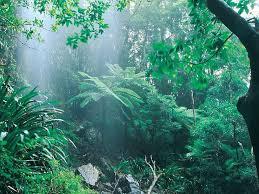 http://tbn0.google.com/images?q=tbn:nOh9tWj8bczlbM:http://www.kaliteliresimler.com/data/media/1145/Rain_forest.jpg