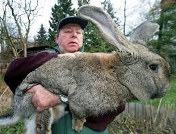 Kanin Uppfödare i Uppsala Län