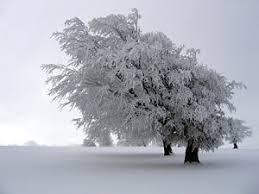 Ха, честит първи сняг!