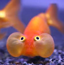http://www.villiard.com/blog/drole-de-poisson