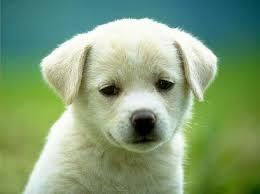 Puppy 1!