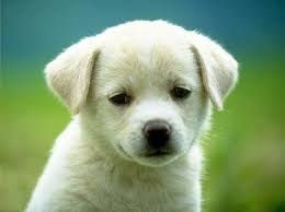 external image cutest%2520puppy.jpg