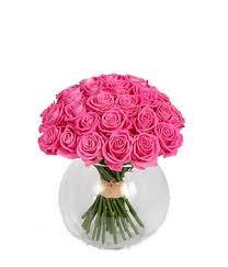 ������ ���� ���� Pink_Rose_Main.jpg