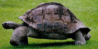 http://guionista.wordpress.com/2006/10/17/las-costumbres-de-las-tortugas/