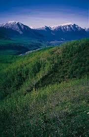 external image borealforest.jpg