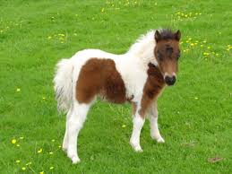 (image: http://tbn0.google.com/images?q=tbn:vIpgQZWHXKoU5M:http://www.culmvalleyminiatures.co.uk/Images/FoalL.jpg)