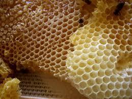 חלת דבש כל תא הוא משושה