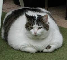 http://tbn0.google.com/images?q=tbn:yiCoPQTChIrjVM:http://www.pantherkut.com/wp-content/uploads/2007/06/fat_cat_4.jpg