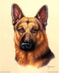 اكبرمجمع لصور الكلاب JDG0221~German-Shepherd-Posters