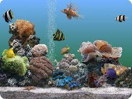 הורדה|שומר מסך אקווריום | Marine aquarium