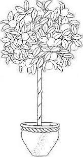 דףצביעה עץ הדר ננסי