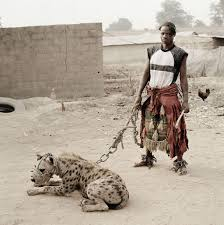 [Image: nigerian%26pet%2520hyena.jpg]