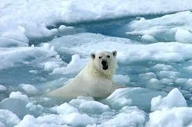 Deshielo en la zona ártica